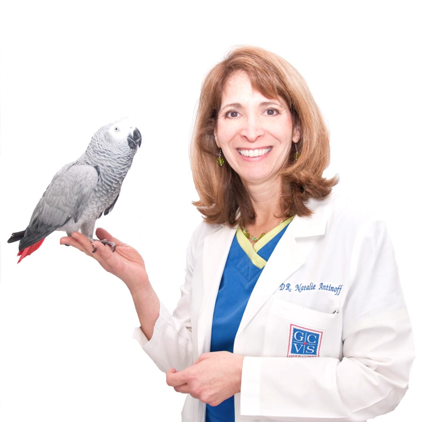 Natalie Antinoff, DVM, DABVP (Avian)