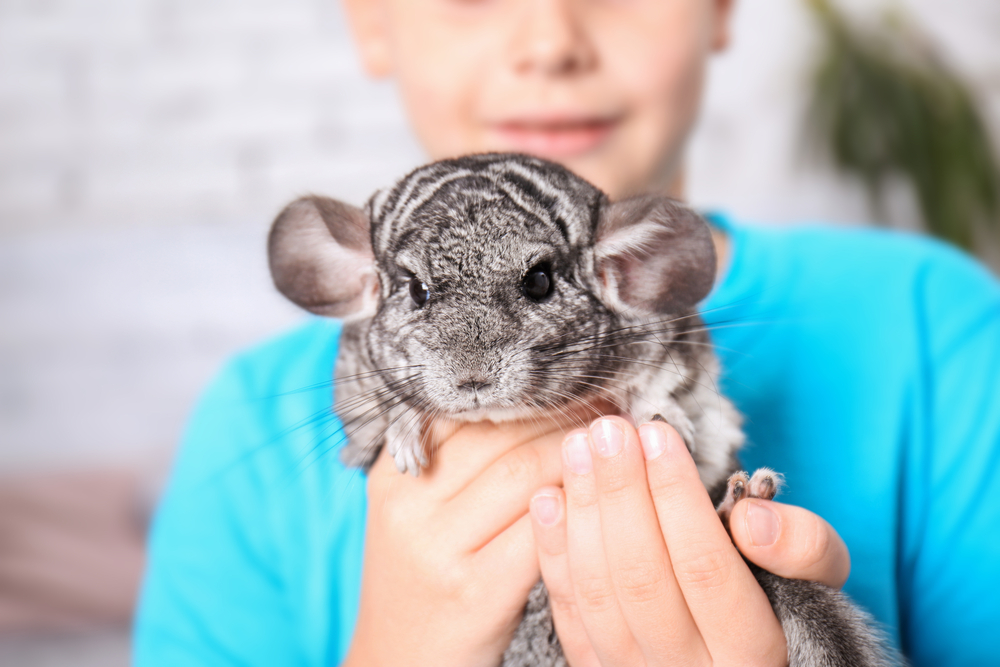 Exotic Pets: How to Care for Some of the Most Unique Pets ...