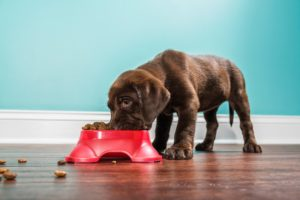 Nutrition for Athletic Pets