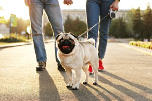 Pet Weight Management