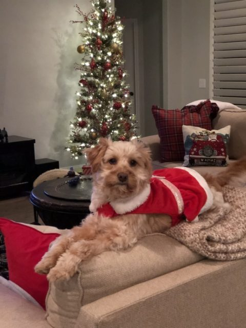 Ember enjoying an amazing holiday season and new year after recovering from sever burn wounds